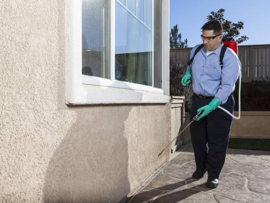 general pest inspections hindmarsh